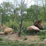 Zoo Snooze 2015 - IMG_7184.JPG