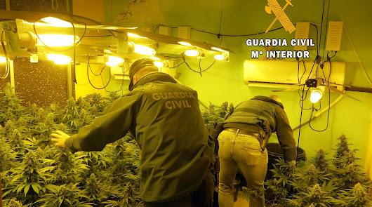 Descubren una casa con más de 200 plantas de marihuana en Huércal de Almería
