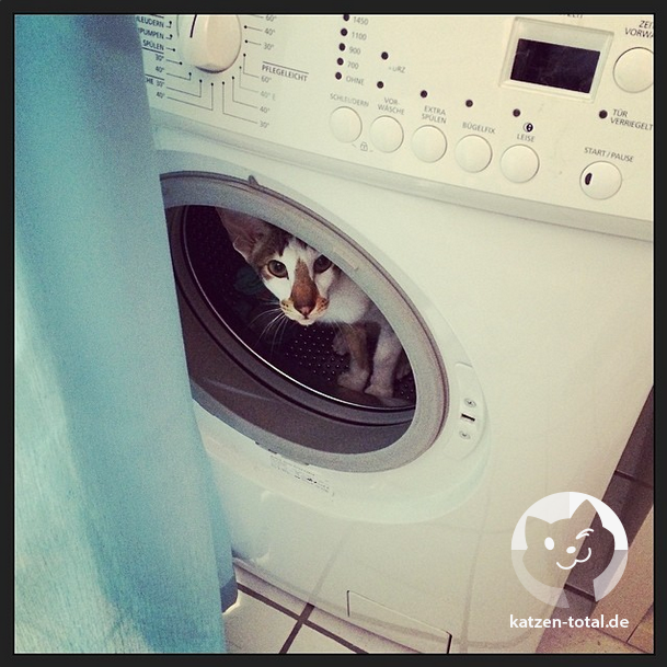 monkey_washer.png
