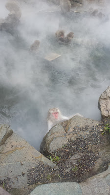 The Snow Monkeys of Jigokudani Yaen Koen Monkey Park - Fading in and out of view from the steam