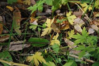 Цэцэг ургамал /Photography by Зураг.мн/