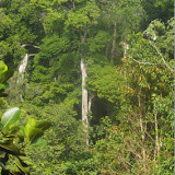 Piste de Coralie (Guyane). 28 novembre 2011. Photo : J.-M. Gayman