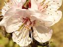 11th April 2012 - Prayer for Peace