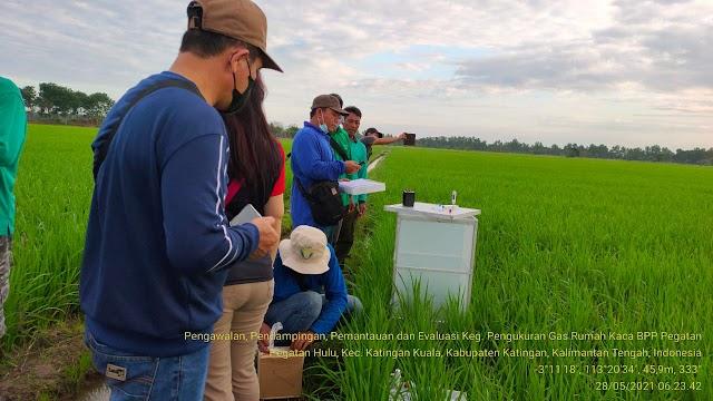 Petani Katingan Kuala Adopsi Pertanian Ramah Lingkungan