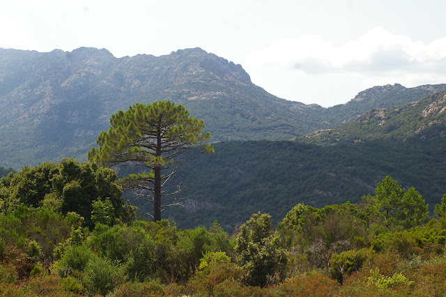 Au-dessus du Col de Bacinu (800 m), Corse du Sud, août 2006. Photo : J.-M. Gayman