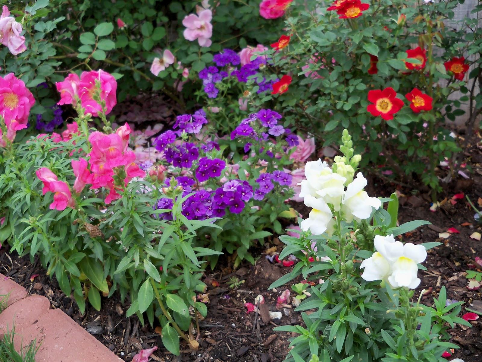 Gardening 2011 - 100_7313.JPG