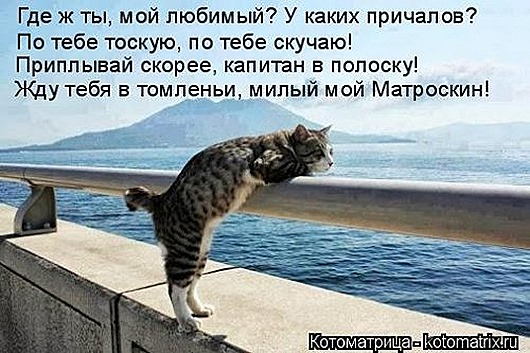 1447398832_kotomatricy-22