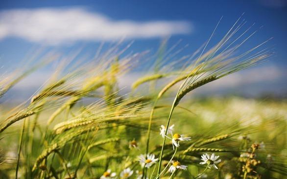 Risultati immagini per immagini vento