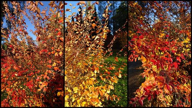 2018-10 October Autumn Colours1