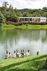 Instituto de Arte Contemporânea em Inhotim - Brumadinho, Minas Gerais. Fotos do evento Inhotim. Foto numero 13.