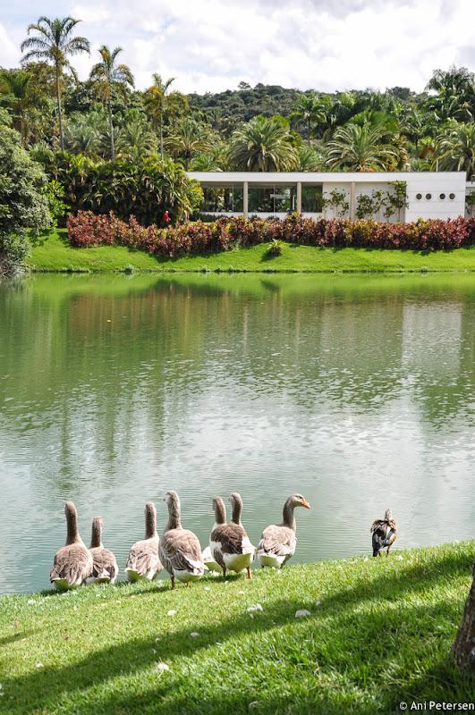 Instituto de Arte Contemporânea em Inhotim - Brumadinho, Minas Gerais. Fotos de Inhotim. Foto numero 13.