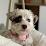 Gil Muiños's profile photo