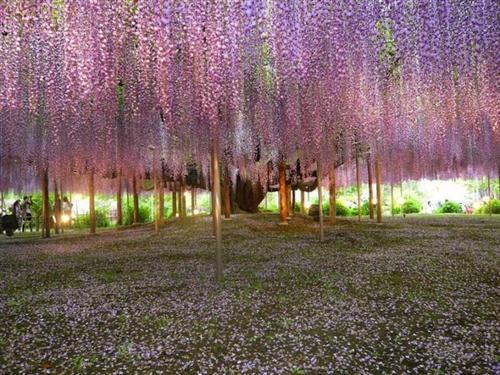 உலகின் மிகவும் அழகான மரம் இதுதான் : புகைப்படங்கள் Tree