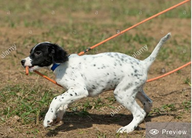 1-English Pointer 01