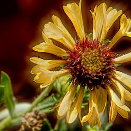 yellow flower by Fabienne Lawrence - Uncategorized All Uncategorized ( nature, yellow, yellow flower, flower )