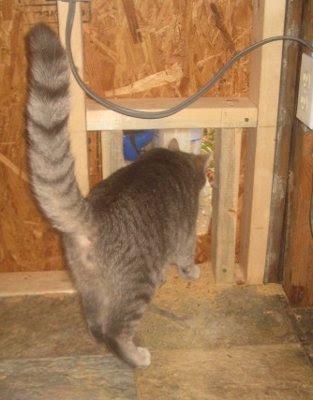 Riley inspects the progress & 5 Acres u0026 A Dream: Kitty Door Check pezcame.com