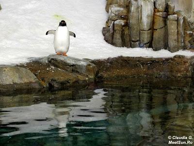 Montreal - Biodome. Pinguini