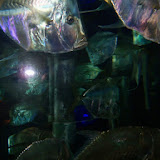Downtown Aquarium - 116_3836.JPG