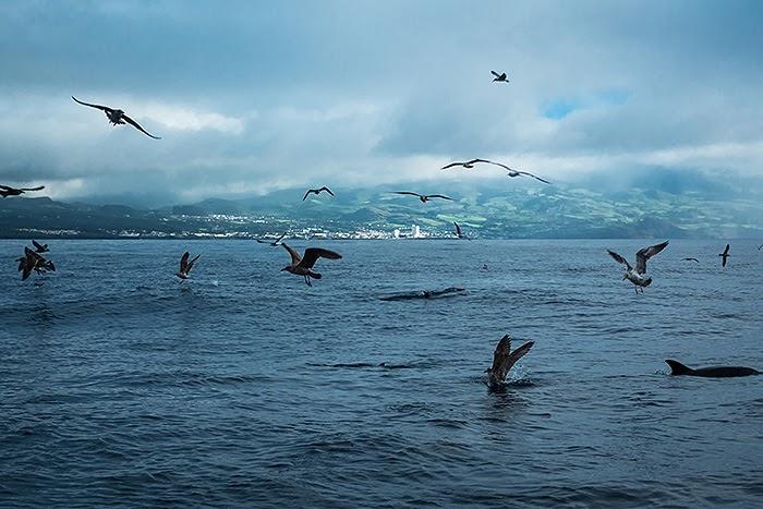 Whales02.jpg