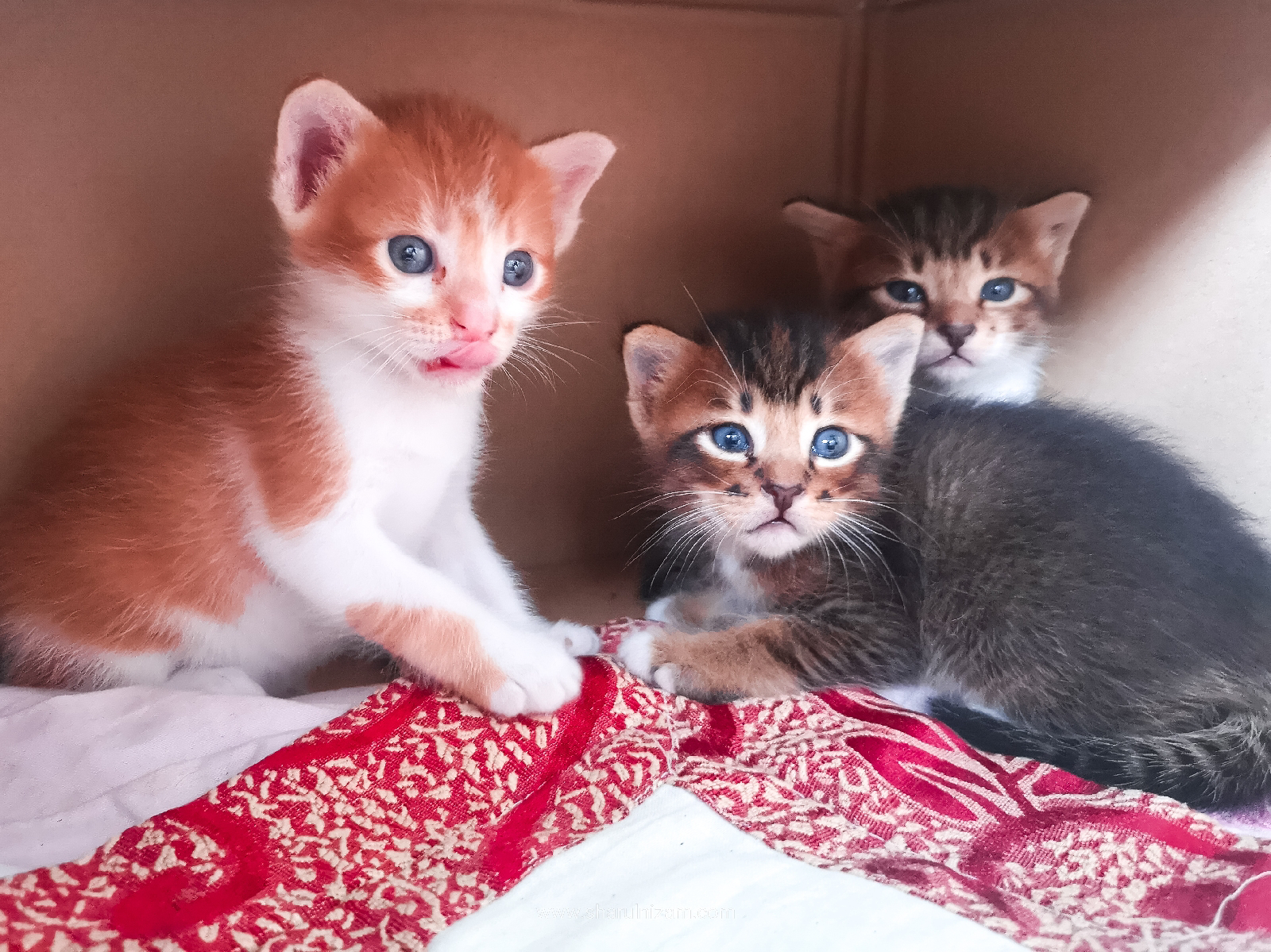 Anak Kucing Comel Peneman Nenek Hafiz
