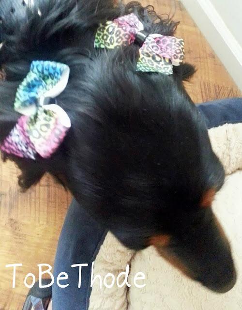 Aggie bows