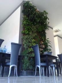 restaurant d'entreprise à NIMES mur végétal réalisé en 2008
