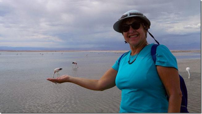 flamingo-bebendo-na-mao-da-Gleidys-perspectiva