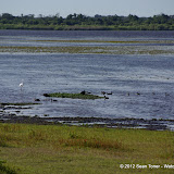 04-06-12 Myaka River State Park - IMGP4445.JPG