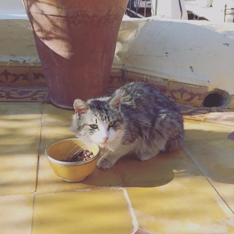 A Life In Marrakech