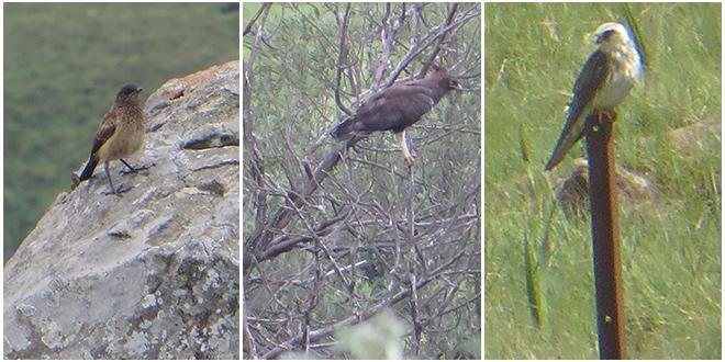 drie vogels gezien in de zuidelijke Drakensberg - Zuid Afrika