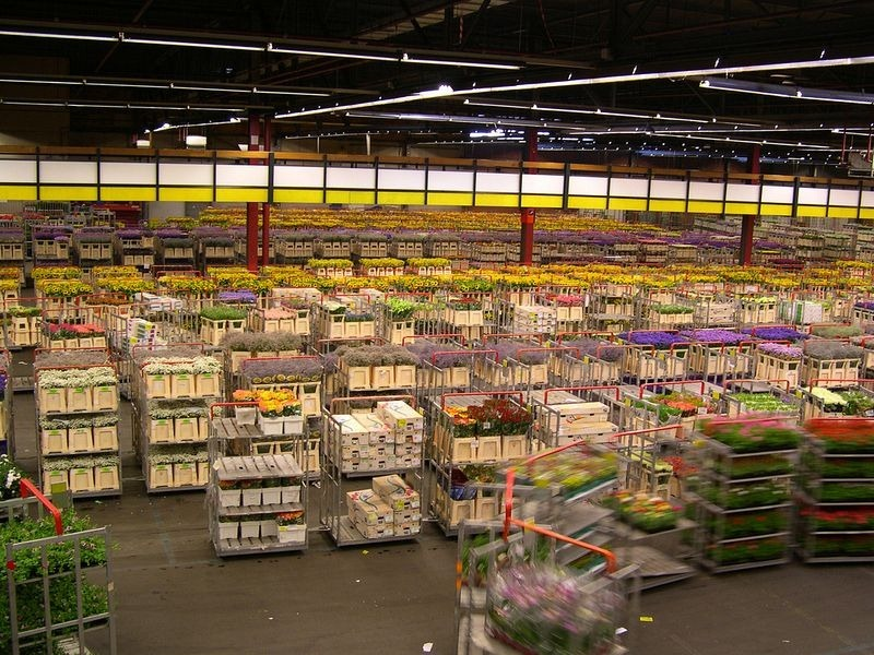 aalsmeer-flower-auction-1