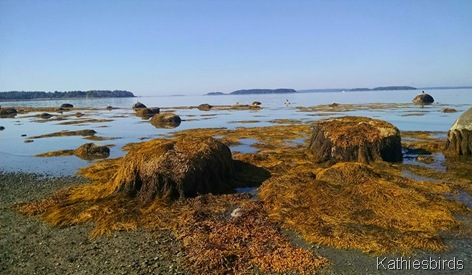 15. Low tide at MF 9-18-15