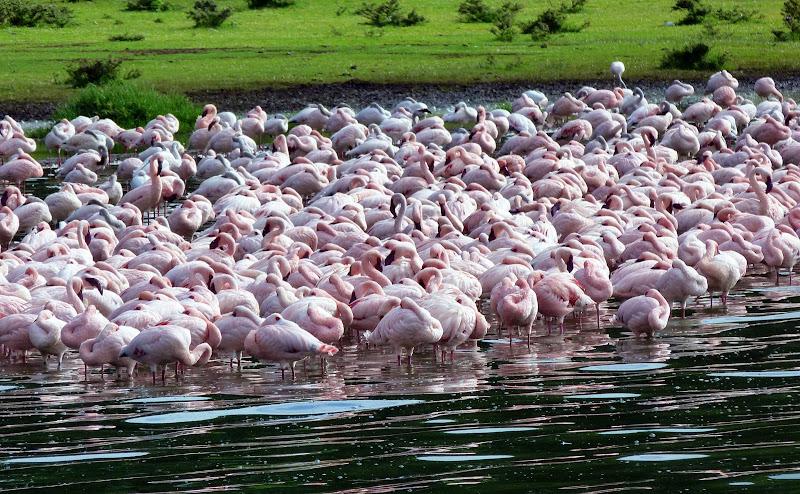 #wildlifesafaritanzania #Travelbloggerindia #Travelblog #Tanzaniatravelblog #tanzaniatourism #Tanzaniawildlifespotting #wildlifesafariafrica #Ngorongoroconservationarea #lakemagadi