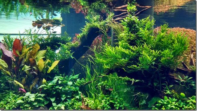 florestas-submersas-lisboa-1