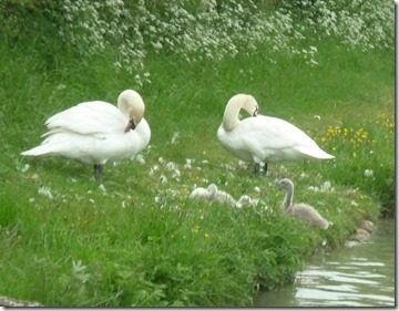 swan family napton junction