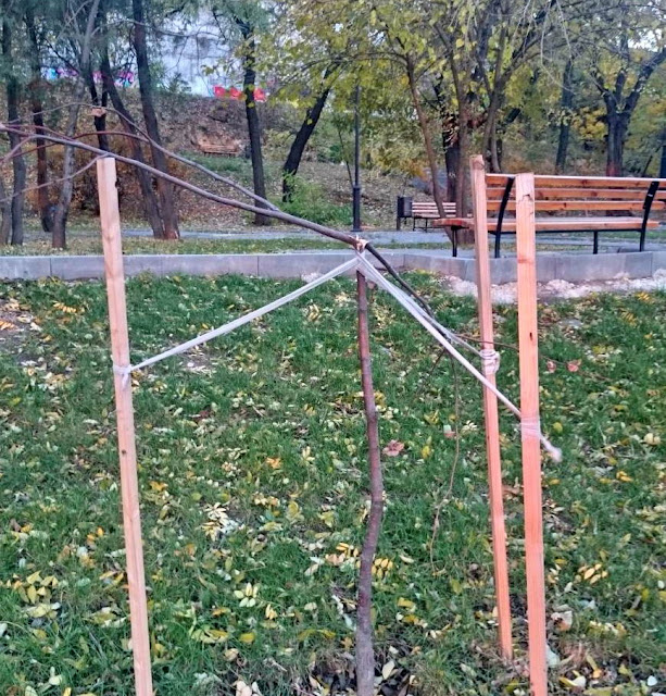 7bd72f544fdac61a1bda7a897c685e59 В Одессе продолжаются акты вопиющего вандализма