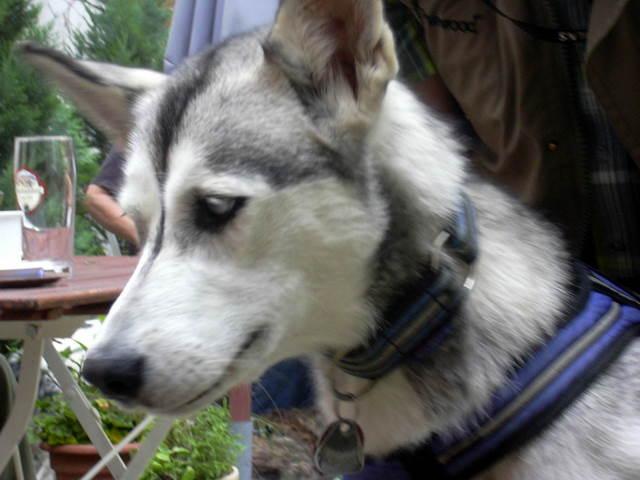 20110629 Hundespaziergang38 - HS%2B38%2B%252822%2529.JPG