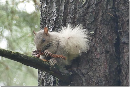 chippewa_falls_lake_wissota_squirrel13
