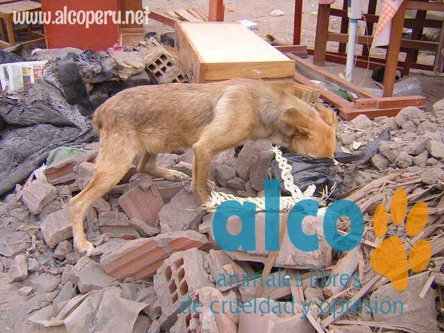 1era visita asistencia animales damnificados terremoto  Pisco 2007 (19)