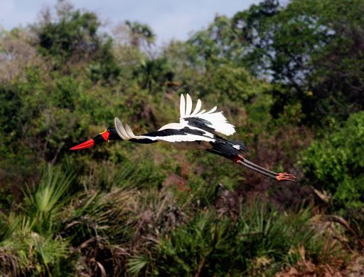 Biodiversity in Tana delta