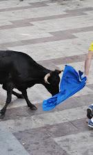 VAQUILLAS SANTA ANA 2013 083.JPG
