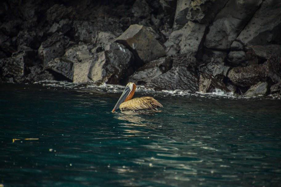 galapagos - Galapagos_FB_2-4.jpg
