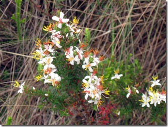 flores-silvestres-carrancas-4