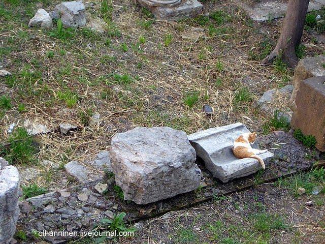 В ряду сказок о кошках у Джанни Родари есть и сказка о кошках Торре-Арджентина