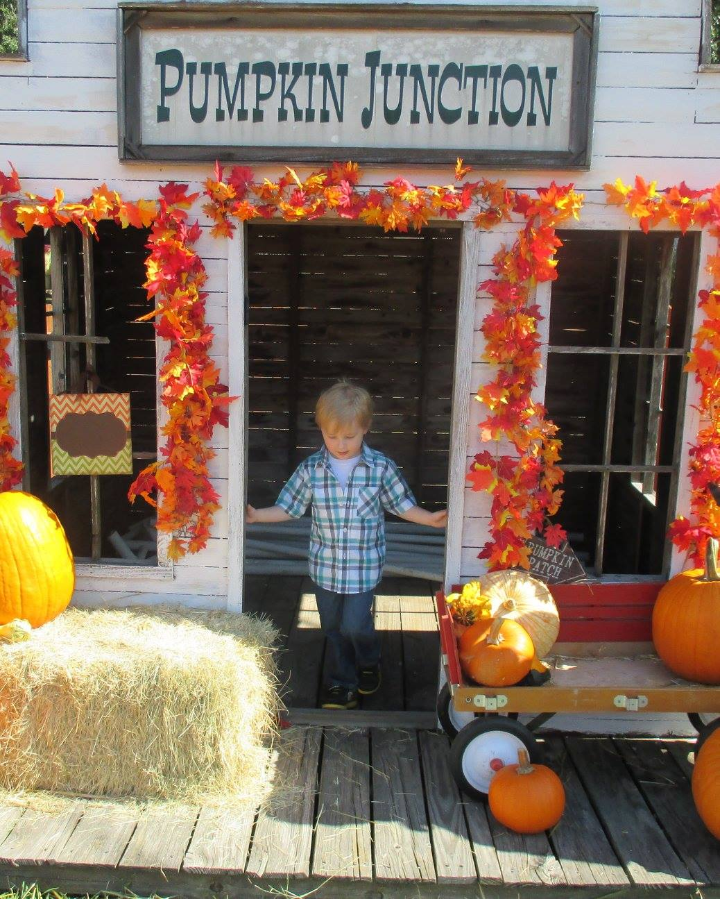Pumpkin Patch 2015 - 12087817_10153209195362404_4000039879263360809_o.jpg