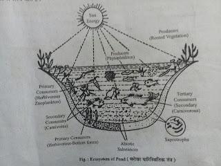 जल का पारिस्थितिक तन्त्र