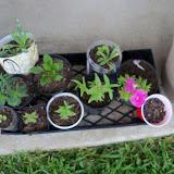 Gardening 2010, Part Two - 101_2801.JPG