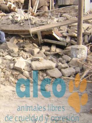 1era visita asistencia animales damnificados terremoto  Pisco 2007 (5)