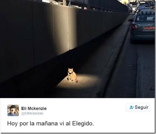 humor twits de gatos (12)