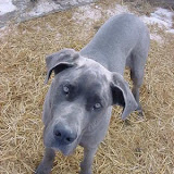 True Blue...as he grew - gale1.jpg